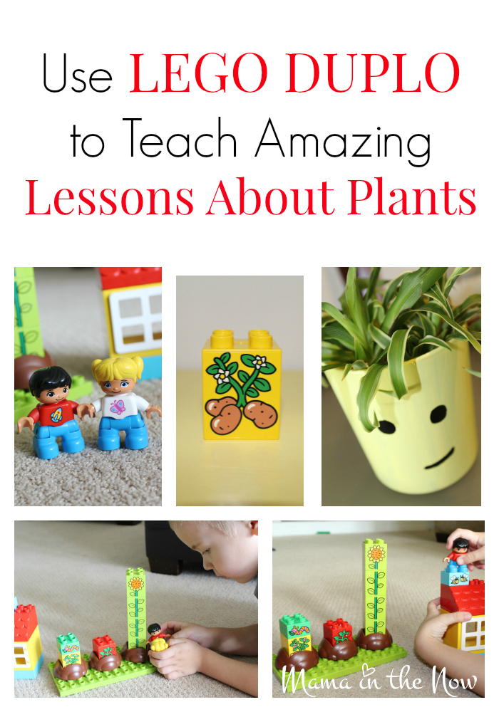 Use LEGO DUPLO to teach amazing lessons about plants. Great for homeschooling classes for preschoolers and elementary school ages.
